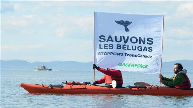 Des activistes de Greenpeace sont à Cacouna pour dénoncer le projet de construction d'un port pétrolier proposé par TransCanada, le 25 avril 2014.