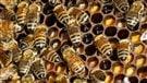Pesticides : les apiculteurs veulent un resserrement des règles (2015-05-20)