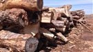 La biomasse, un danger pour les forêts européennes (2014-05-28)