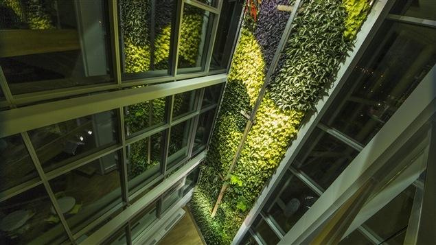 La nouvelle tour de 15 étages du mouvement Desjardins à Lévis abrite le plus grand mur végétal intérieur du monde.
