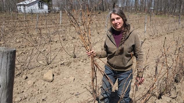 Carole Desrochers, vigneronne