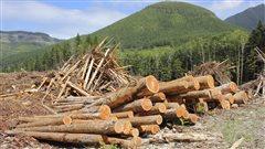 Des billots de bois empilés