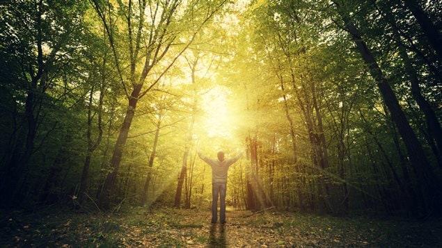 Un homme seul au milieu d'une forêt contemplant la nature.