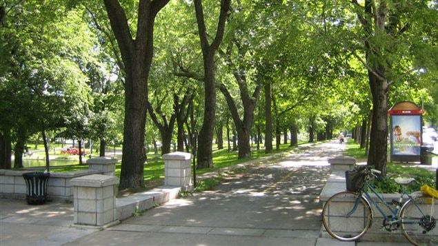 Le nombre �lev� de cyclistes n'avait pas �t� anticip� lors de la conception du parc La Fontaine.