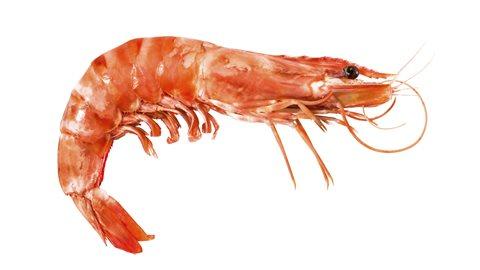 Les crevettes sont des hermaphrodites