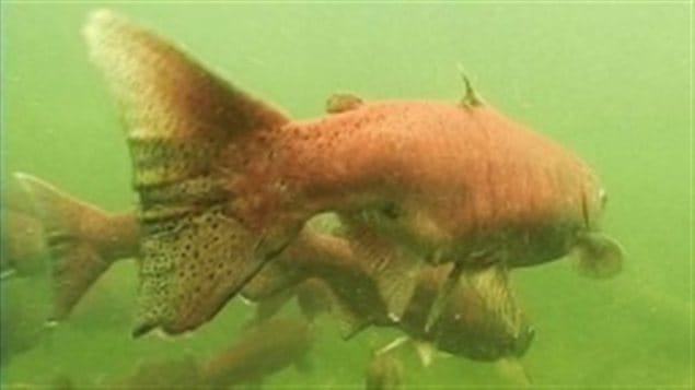 Le bilan national de santé et de menaces des eaux canadiennes de WWF-Canada mentionne que la forte présence de l'uranium et de l'aluminium dans les eaux du fleuve Yukon menace sa riche biodiversité