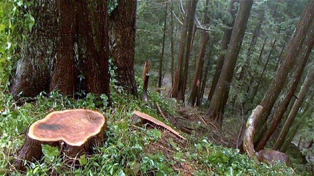 Déforestation industrielle sur les pentes des Rocheuses en Alberta