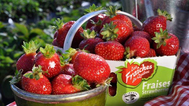 Des fraises du Québec