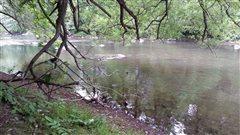 L'homme a été retrouvé à cet endroit dans la rivière Saint-Charles.