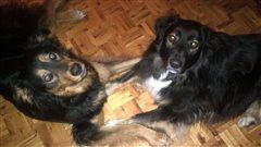 Shadow et Milo