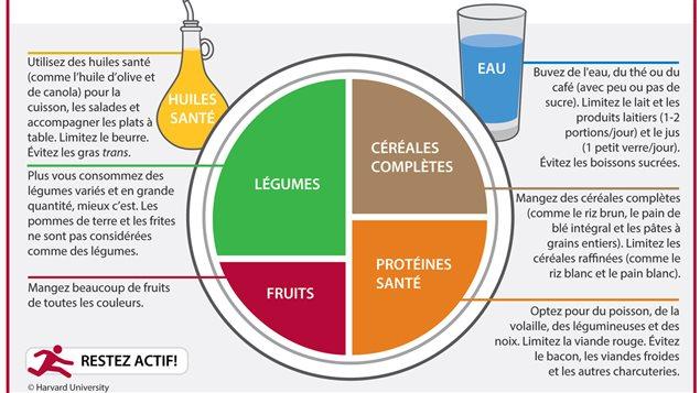 L'Assiette santé selon le Harvard School of Public Health