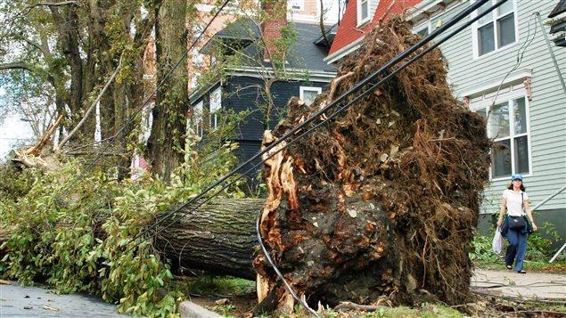 Séquelles de l'ouragan Juan en Nouvelle-Écosse en 2003