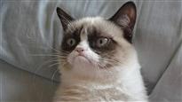 L'incroyable histoire de Grumpy Cat