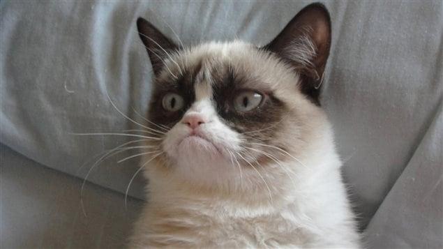 Grumpy cat, le chat qui fait fureur sur Internet