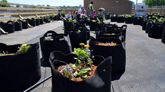Les Urbainculteurs veulent promouvoir le jardinage et l'agriculture urbaine