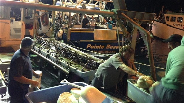 Des pêcheurs de pétoncles rentrent au quai de Cap-aux-Meules avec leurs prises du jour.