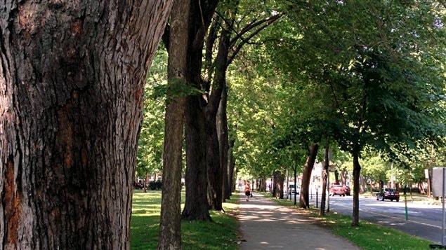 Allée d'arbres au parc La Fontaine