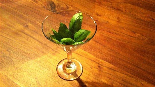 Verre et feuilles de basilic