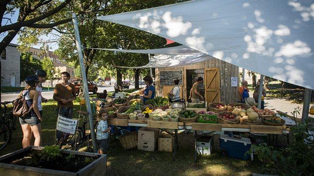Petit marché public dans un arrondissement de Montréal