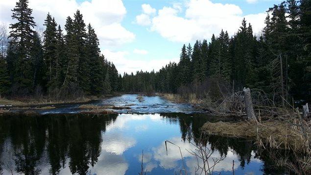 La piste de randonnée Waskesiu River dans le Parc national du Canada de Prince Albert