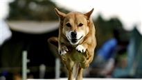 Un gymnase pour chiens