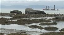 Énergie Est : des millions de barils de pétrole et d'immenses pétroliers à Cacouna