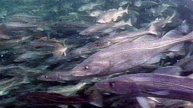 Le réchauffement climatique poussera les poissons vers les pôles