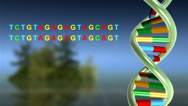 Échelle d'ADN et code de lettres