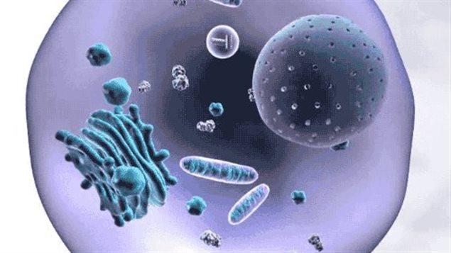 Au coeur de la cellule