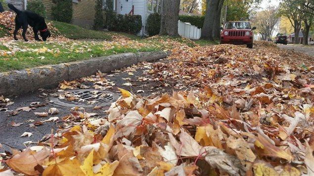 Des feuilles mortes