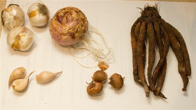De gauche à droite et de haut en bas : l'allium « purple sensation », la fritillaire impériale, l'eremurus, l'iris et le crocus hâtif