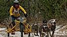 L'Outaouais accueille un championnat de course de chiens