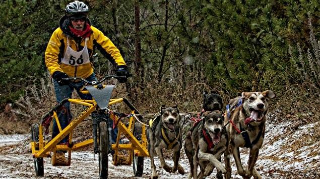 Le Championnat canadien de course de chiens.