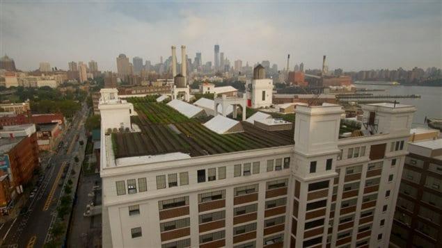 Les fermes urbains sur les toits de Brooklyn