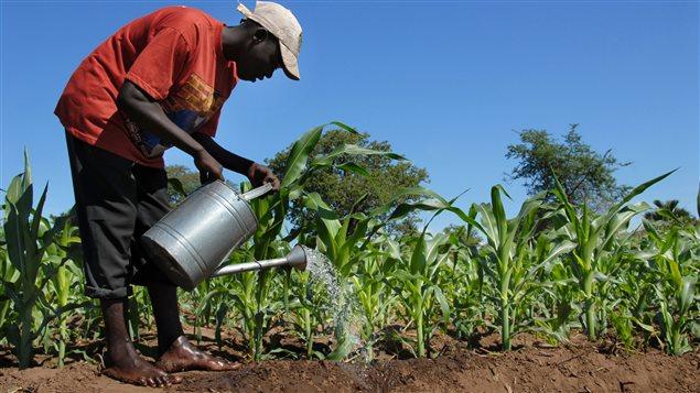 Les projets soutenus par le Canada comprennent le recours à des campagnes d'information pour offrir des solutions éprouvées aux agriculteurs en Tanzanie et au Kenya (Afrique)