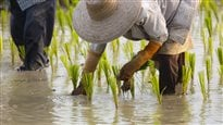 Dans la peau d'un fermier philippin