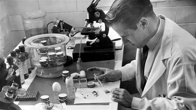Wilhelm Burgdorfer en 1954  Photo :  PC/(AP Photo/National Institute of Allergy and Infectious Diseases