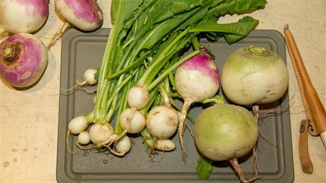 Quelques-uns des légumes-racines dont Pierre Gingras a parlé durant sa chronique
