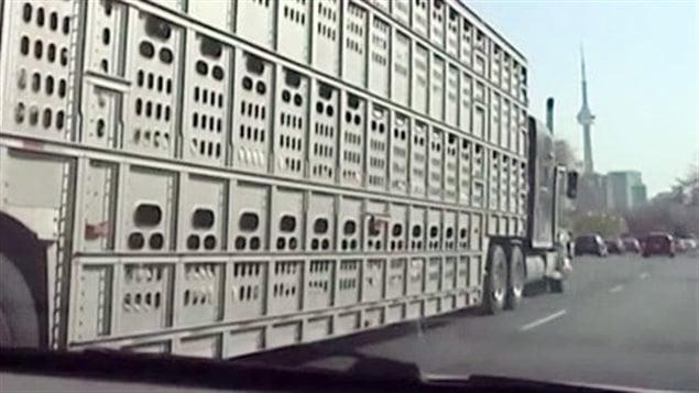 transport animaux