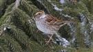 Des ornithologues recensent les oiseaux qui hibernent