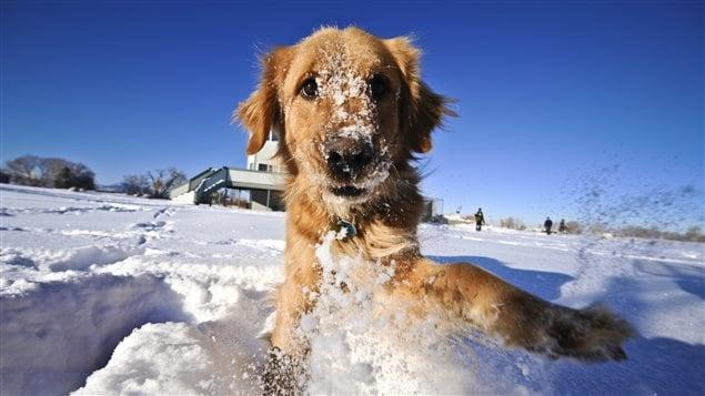Un chien joue dans la neige