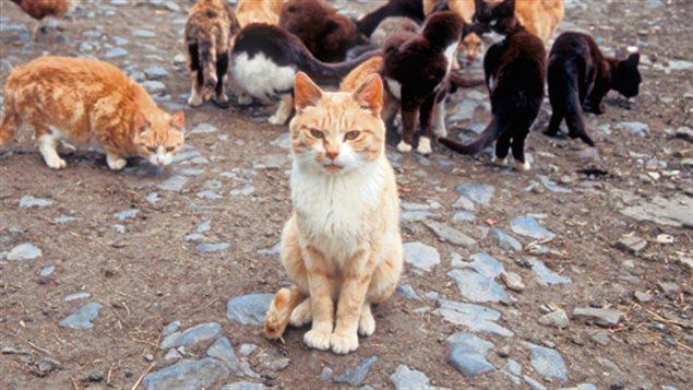 chat sexe sans inscription gratuit charlottetown
