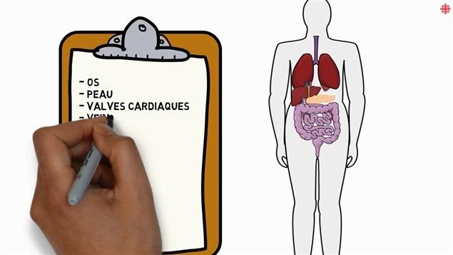 Plusieurs organes et composantes peuvent être prélevés par les médecins.