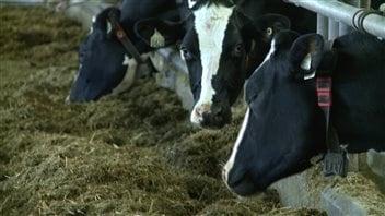 Les fermes familiales du Québec seraient menacées par l'arrivée d'investisseurs qui font grimper le prix des terres agricoles, selon l'UPA.