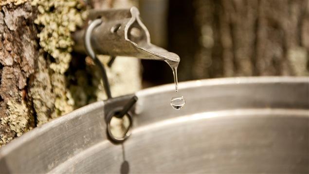 De l'eau d'érable recueillie au printemps