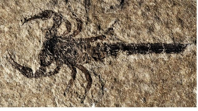 New Discovery Ancient Scorpions
