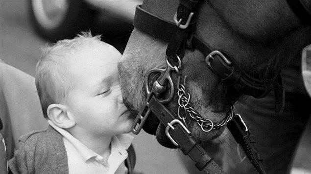 Le cheval en ville, un contact positif et éducatif pour les petits et les grands.