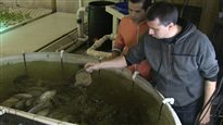 Expérience de culture aquaponique à Toronto