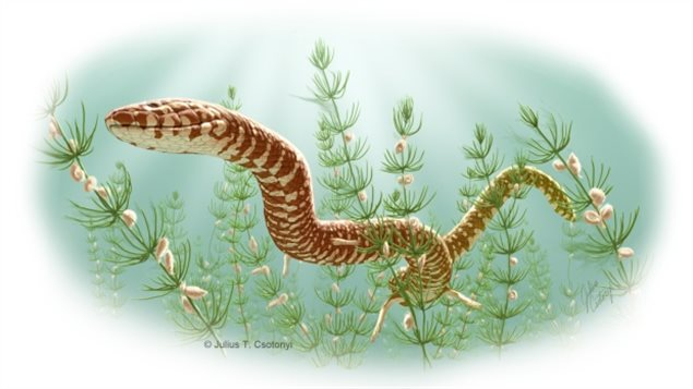 Un serpent aquatique nage au milieu d'algues.