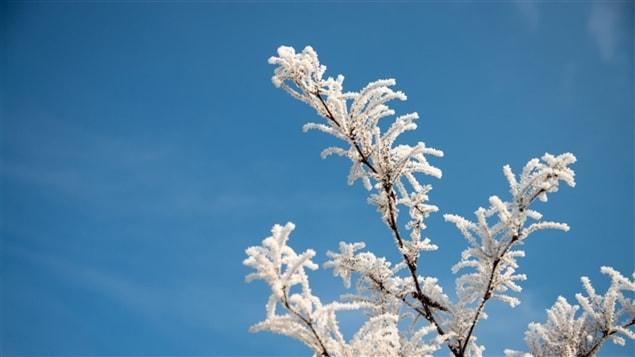 Des branches d'arbre gelées